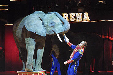 corty althoff elefanten