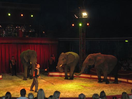 074c6942c086 Cirkus Arenas 3 afrikanske elefanter