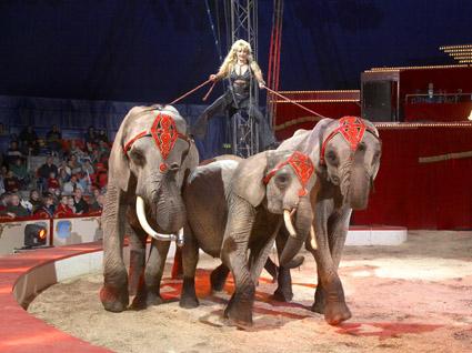 elefanter kan også danse bog