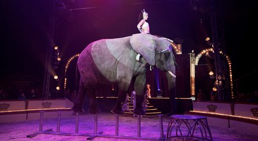 masse fakta om elefanter