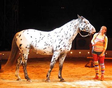 pippi hest navn